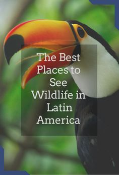 Latin America is full of wonderful wildlife opportunities, discover ten of our favourite places to indulge your passion.