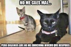 ★★★★★ Ríe a carcajadas con humor grafico reyes magos, naruto memes en español latino, memes graciosos de brasil y alemania, memes hillary y gifts zevran ➫➬➫ http://www.diverint.com/imagenes-con-humor-perder-el-argumento-borrar-los-comentarios/