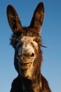 Donkey expression - yep...my next resident on the farm. Definitely!