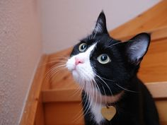 What if you Were a Cat? http://www.searchingforthehappiness.com/what-if-you-were-a-cat/