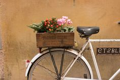 Italy Photography, Flower Seeds, Bike Parked in Rome, Roman Holiday, weekend in Rome, Garden, nature, neutral decor, Bike Art