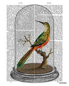Bird in Bell Jar on Antique Page  belljar by DottyDictionary, $15.00