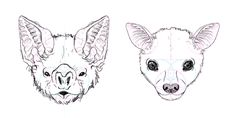 Face Drawing how to draw bat face head 10 Animal Sketches, Animal Drawings, Art Drawings, Bat Anatomy, Bat Sketch, Draw A Bat, Tattoo Gesicht, Bat Eyes, Human Face Drawing