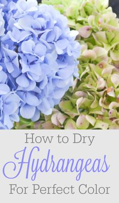 A beautiful hydrangea wreath with all the colors of fall is within reach! Learn how to dry hydrangeas for perfect color and the most gorgeous decorations. Just be happy you didn't have to do all the trial and error I did!