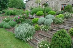 massif plantes aromatiques escalier bois a corseul