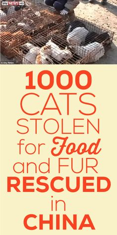 1,000 Cats Stolen For Food And Fur, Rescued In China!