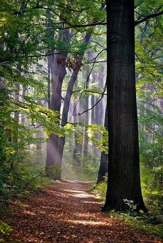 Segiet nature reserve (Bytom, Poland) by Andrzej Pasieka cr.c.
