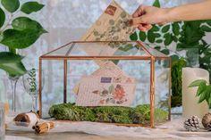 Standard Large Geometric Glass Card Box Terrarium with Slot image 10 Terrarium Ideas, Planter Ideas, Glass Terrarium, Terrariums, Small Potted Plants, Thanks Card, Rose Gold Pink, Card Box Wedding, Congratulations Card