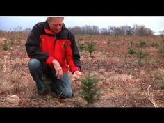 ▶ How Does a Christmas Tree Grow -YouTube