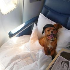 If only we all looked this lovely after a long-haul flight.