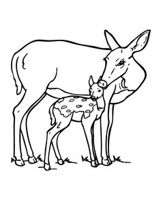 Attractive Deer And Fawn Coloring Page
