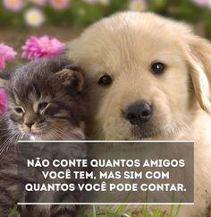 Amigos para sempre!!