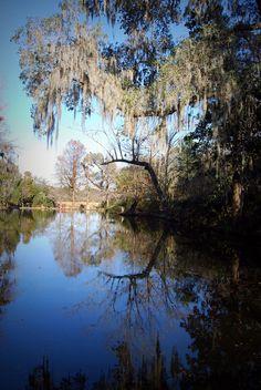 Magnolia Plantation and  Gardens in South Carolina.