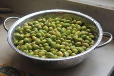 "Freshly harvested Galilee olives   בחלק הקודם של המתכון תיארנו את השלב הראשון בהכנת הזיתים, בו ""דפקנו"" אותם ואז אחסנו בצנצנת עם מים נקיים כדי להוציא מהם את המרירות. בחלק שלפניכם נסיים את תהליך הכבישה שבסיומו תזכו לזיתים נהדרים ולתהילת עולם בקרב מכריכם. אנחנו חיים בעידן של מתכונים מהירים ומנות אינסטנט, וזיתים ""דפוקים"" הםפחות או יותר ההפך המוחלט ... Hummus, Beans, Vegetables, Food, Vegetarische Rezepte, Healthy Food Recipes, Convenience Food, Harvest, Fast Recipes"