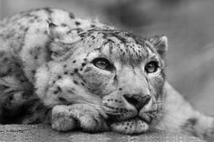 inspiring. wildlife. image