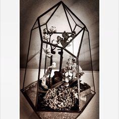 #terrarium