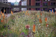 Urban Garden Design Knipophia - The Barbican, London - an urban garden oasis among brutalist architecture in the heart of Lndon
