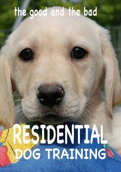 Sending your dog away for training - a look at the pros and cons of residential dog training