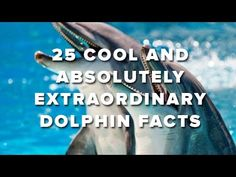 Kids Ocean Movie - Who Lives in the Sea? Sample Chapter - Dolphins - Ocean Products for Kids - YouTube