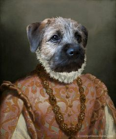 Queen of the Borders  #border terrier Gallery | yourpetinuniform.com