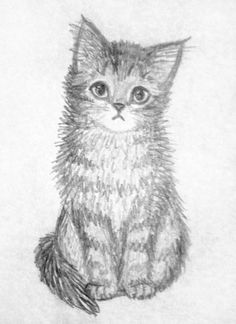 314 Best Drawing Cats Images In 2019 Cats Drawings Cat