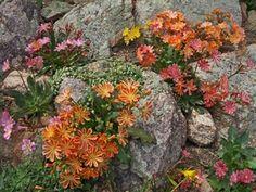 Plant Sale frenzy: bring some color into your life! | Denver Botanic Gardens
