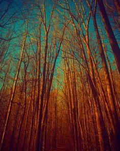 Burnt orange Autumn colors fairytale fall decor aqua turquoise canadian forest maple trees nature photography - Enchanted 11x14. $40.00, via Etsy.