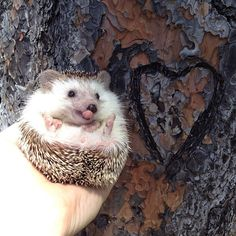 Pictures Of Biddy The Hedgehog Will Turn Any Frown Upside Down ...