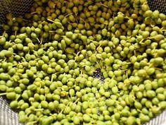 正しい山椒の実の下ごしらえと保存方法の画像