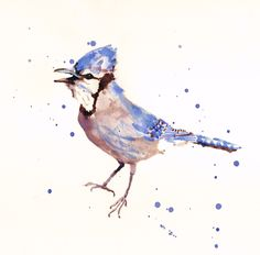 BLUE JAY Watercolor Print, blue jay, bird art prints, watercolor birds, blue gray. $25.00, via Etsy.