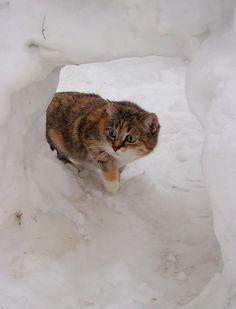 A snow house? by prrk