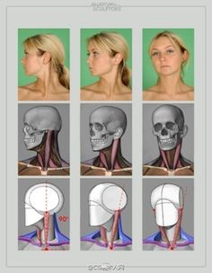 Anatomy Reference Anatomy for sculptors Head Anatomy, Anatomy Poses, Anatomy Study, Body Anatomy, Anatomy Drawing, Anatomy Reference, Figure Drawing Reference, Pose Reference, Drawing Heads