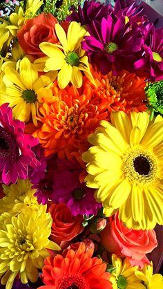 Wallpaper Nature Flowers, Flower Background Wallpaper, Beautiful Flowers Wallpapers, Flower Phone Wallpaper, Flower Backgrounds, Bright Flowers, Pretty Flowers, Spring Flowers, Flowers For Algernon