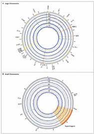 Resultados:  Los aislados H1 y H2 se secuenciaron en menos de 24 horas, con suficientes lecturas de secuenciación de ADN generadas en este tiempo para cubrir los genomas 60 y 32 veces, respectivamente. C6, M4 y N5 se secuenciaron de forma similar rápidamente en coberturas de 28, 37 y 36, respectivamente. (Cuadro 1 del Apéndice Suplementario).   Utilizamos previamente obtenido secuencias del genoma de N16961 CIRS101, y MJ-1236 como referencia genomas para facilitar la caracterización del…