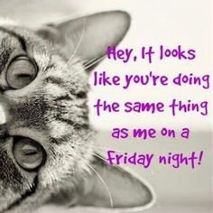 #Friday #cats