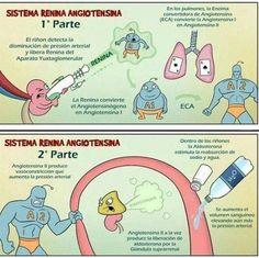 Sistema Renina Angiotensina Aldosterona :P