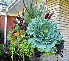 front porch container plant ideas - Google Search
