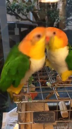 funny birds Come on Harry, its my turn to play the marimba Funny Animal Memes, Cute Funny Animals, Funny Animal Pictures, Cute Baby Animals, Cute Dogs, Funny Birds, Cute Birds, Pretty Birds, Funny Parrots