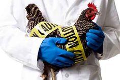 Whence Arrives Bird Flu?