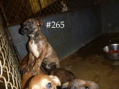Logan County Pound Logan County WV logancountyanimals@gmail.com Please share! The pound is full!!