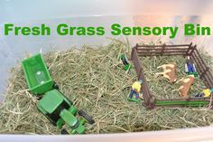 Fresh Grass sensory bin with farm theme - use the alfalfa hay or timothy hay for the bunnies (available at your favorite super store)