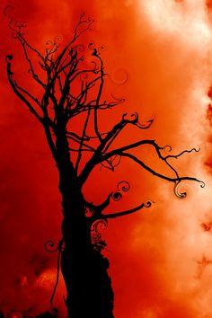 Crazy Tree, Sassafras, Melbourne, Australia Looks like something straight out of the mind of Tim Burton.