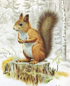 Staffan Ullström - Red Squirrel                                                                                                                                                     More