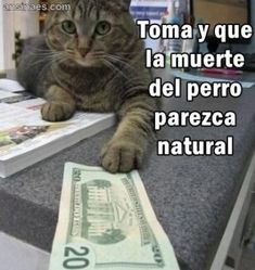 62 ideas memes chistosos gatos for 2019 Funny Cats, Funny Jokes, Funny Animals, Hilarious, Funny Images, Funny Pictures, Spanish Jokes, Video Humour, New Memes