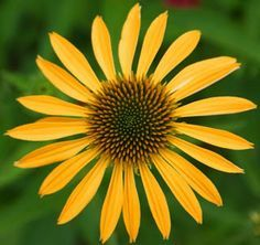 Image Result For Radial Symmetry Nature Symmetry Nature Rotational Symmetry