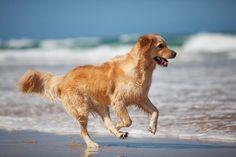 Vakantie met de Hond op Terschelling