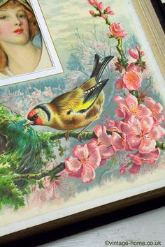 Vintage Home Shop - Victorian Photo Album with Chromoliths - British Birds throughout the Seasons: www.vintage-home.co.uk