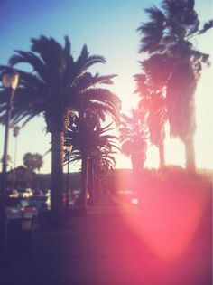 Palms pink summer, young wild free, california girls, tree, sunny days, beach, place, quot, palms