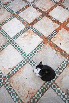 handa:  Chess cat, a photo from Marrakech, South | TrekEarth