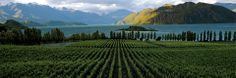 New Zealand wine styles, oh to go there one day